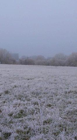 Frosty scene