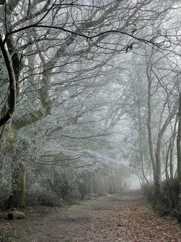 Frosty Scene Old Coach Road