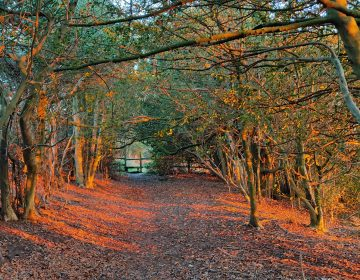Autumn colours Old Coach Road